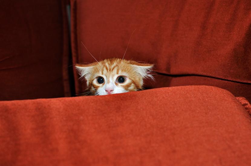 mon chat a peur